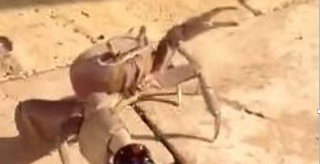 Crab Beer 2